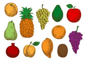 Sketch of fresh organic fruits