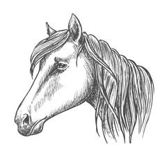 Riding horse head sketch for equine sport design