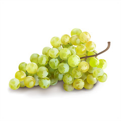 Ripe grape on white background. Vector illustration.