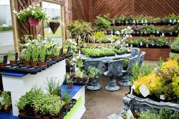 Potted plants in garden centre