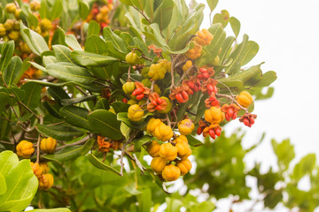 Tree with red orange and yellow fruits