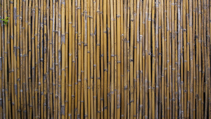 Bamboo fence background and light from top