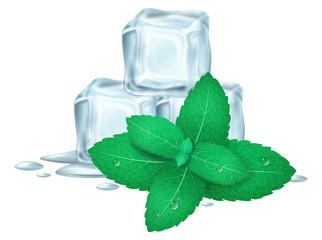 Fototapeta Mint and ice cubes. Vector illustration. obraz