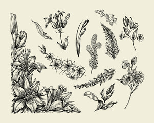 Flowers. Hand drawn sketch flower, lily, fern, grass, herb, bracken, lilia. Vector illustration