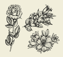Flowers. Hand drawn sketch flower bell, rose, lily, floral pattern. Vector illustration