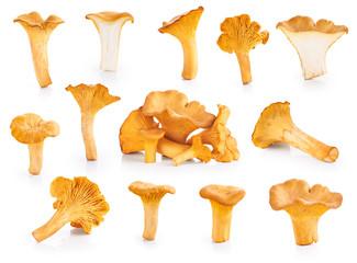 Fototapeta Chanterelle mushrooms isolated on a white background obraz