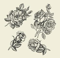 Flowers. Hand drawn sketch flower, rose, dogrose, rosehip, floral pattern. Vector illustration