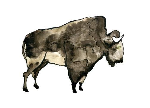 Buffalo watercolor illustration.
