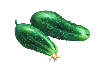 Сucumbers. Hand drawn watercolor painting on white background.