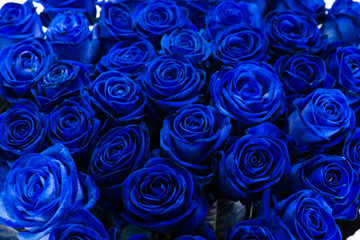 background close-up bouquet of blue roses