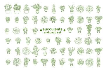 Succulent illustration line sketch set