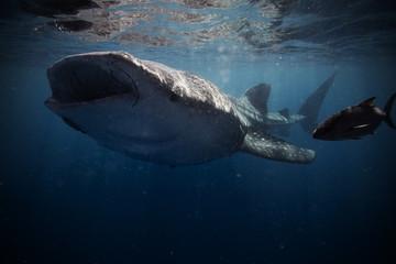 Shark under water