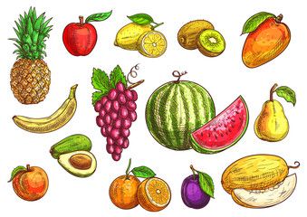Hand drawn sketch of tropical and exotic fruits.
