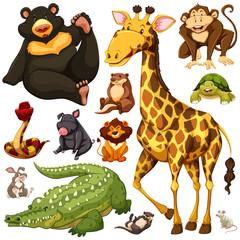 Different types of wild animals