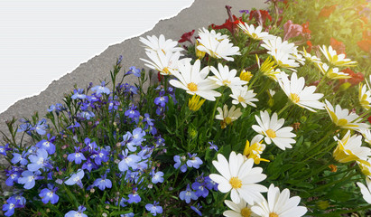 flowers in garden with copy space on torn paper background