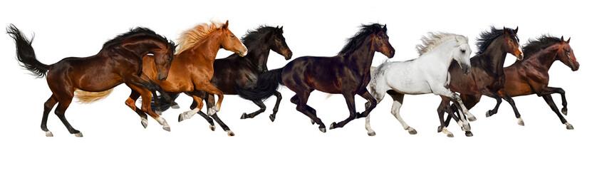 Horse herd run isolated on white, banner for website