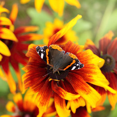 patterned winged beauty/ butterfly sits on a bright flower in the summer