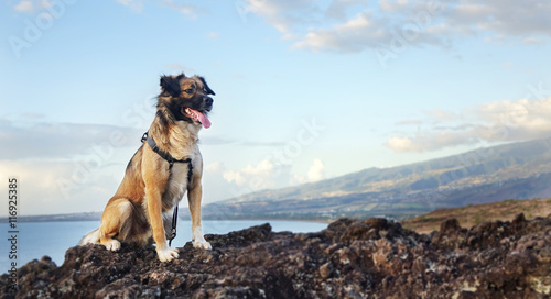 chien assis au sommet d 39 un rocher zdj stockowych i obraz w royalty free w. Black Bedroom Furniture Sets. Home Design Ideas