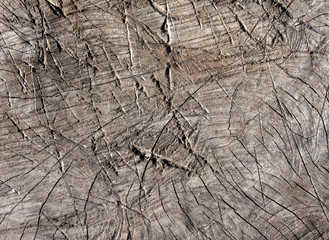 Abstract cut old tree surface with axe scratches.