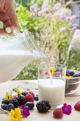 Pouring milk in the glass on the table with blackberries, raspberries, blueberries, mint and marigold on sunny summer background