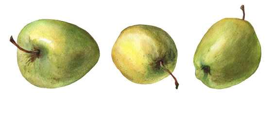 Green apples. Hand drawn watercolor painting on white background.