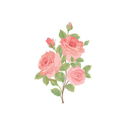 Flower rose bouquet. Floral posy isolated over white background