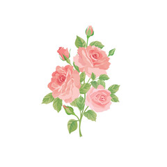 Floral bouquet isolated over white background. Flower rose posy.