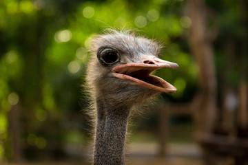 Ostrich head.