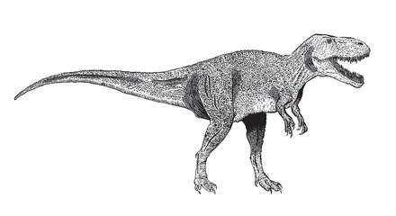 image of Tyrannosaurus Rex, drawn in ink