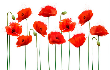 Wall Mural - Abstract background with red poppies flowers. Vector.