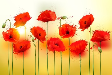 Fototapete - Nature background with red beauty poppies. Vector.