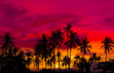 Silhouette coconut palm trees on beach at sunset. Made from vintage filter effect, Vintage tone.