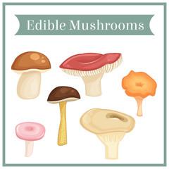 Edible mushrooms. Vector.