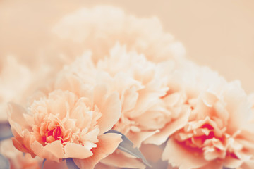 Peony flower background. Color toning applied.