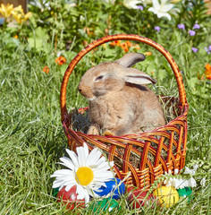 Light red rabbit sitting in Easter basket