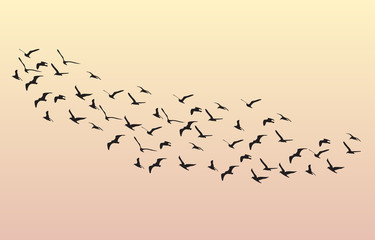 Flock of Geese flying in the dawn on the sky