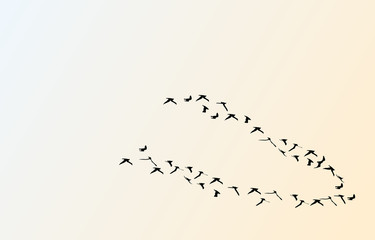 silhouettes of flying birds, vector illustration