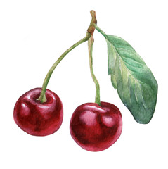 Cherries 3. Hand drawn watercolor painting on white background.