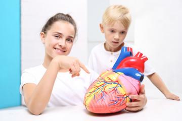 Budowa serca. Dzieci oglądają model ludzkiego serca