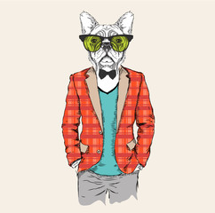 Illustration of dog hipster dressed up in jacket, pants and sweater. Vector illustration