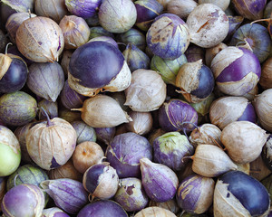 Purple Tomatillo background.