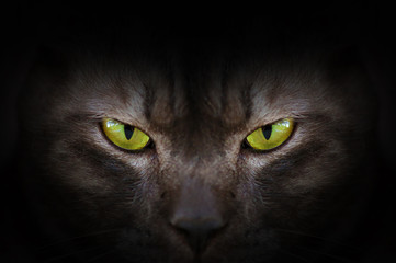 Photo sur Toile Panthère Eyes of black cat in dark, Hypnotic Cat Eyes