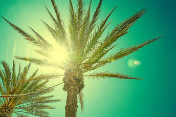 Beautiful view palm leaves in sun light