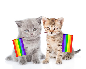 two kittens with rainbow color flag symbolizing gay rights.  isolated on white