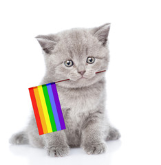 Cute kitten with rainbow color flag symbolizing gay rights.  isolated on white