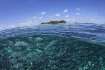 Sipadan Island and Sea. Jackfish school underwater, Half and half over under split photo