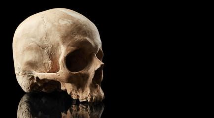 Skull isolated on black background