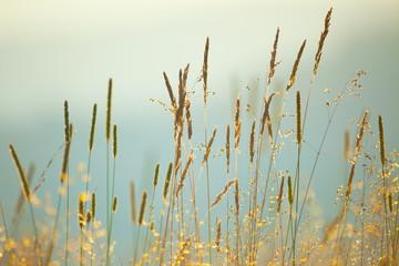 Vintage background of Macro Meadow Herbs