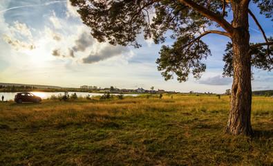 вечерний пейзаж с пышной сосной на берегу реки и грунтовой дорогой