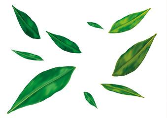 Green narrow leaves